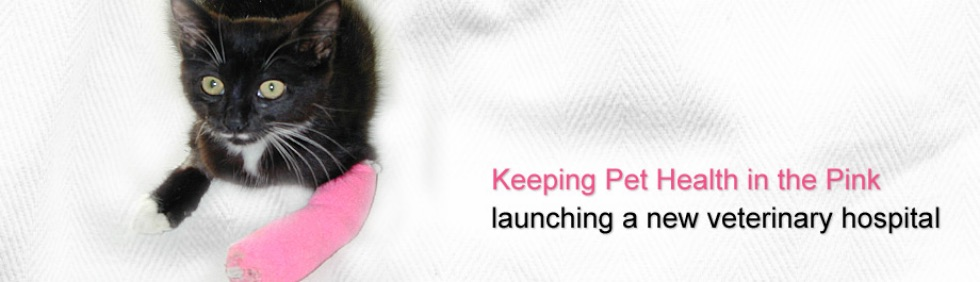 launching a new veterinary hospital